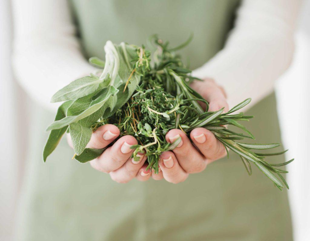 Травы снижающие кислотность желудка